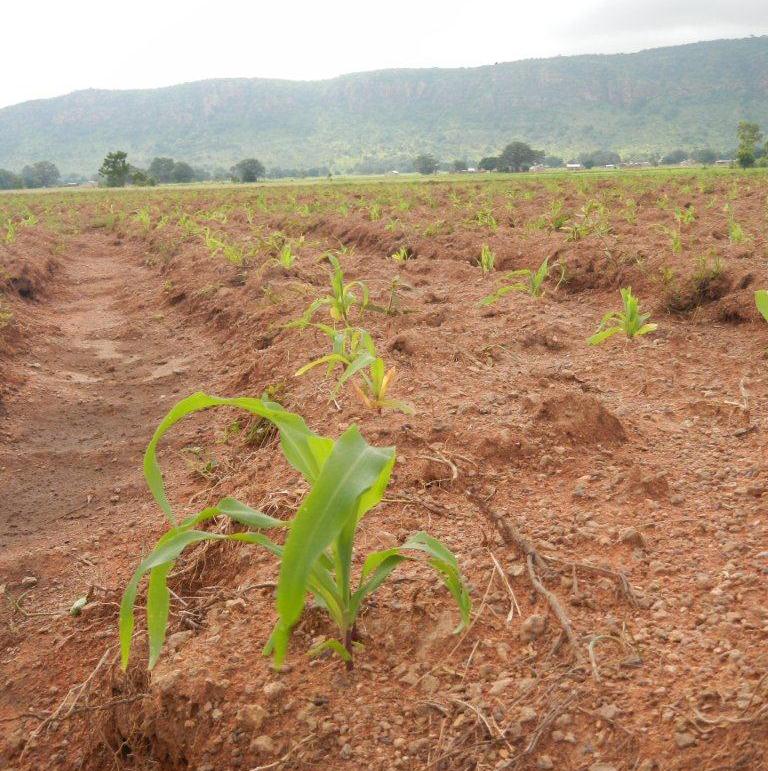 Landwirtschaft Waisenhaus Benin